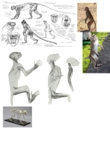 #ref-macaque-Structure